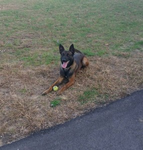 The Starke County Sheriff's Office recently added K9 Zardos to the force.